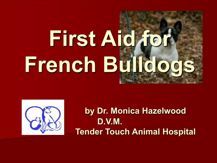 first aid for french bulldogs by dr monica hazelwood d v m tender touch animal hospital n.