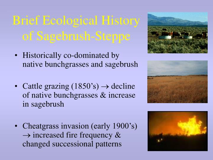 Brief ecological history of sagebrush steppe
