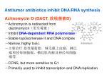 antitumor antibiotics inhibit dna rna synthesis
