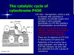 the catalytic cycle of cytochrome p450
