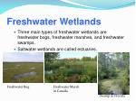 freshwater wetlands1
