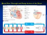 blood flow through and pump action of the heart