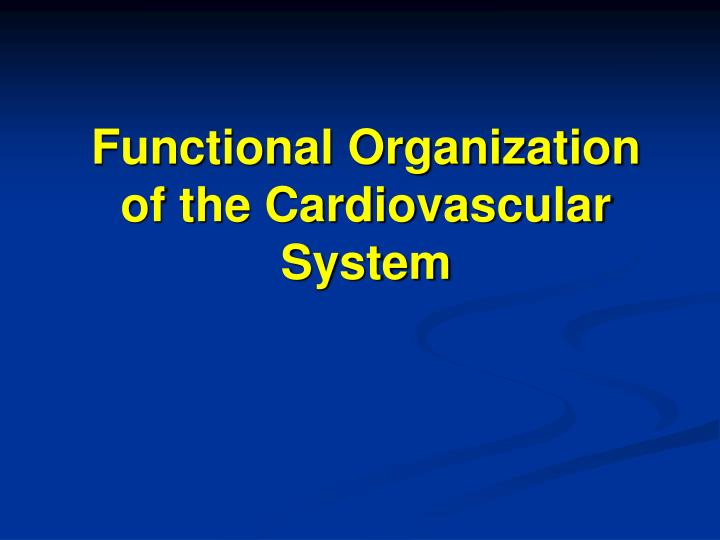 functional organization of the cardiovascular system n.