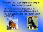 what is the most expensive dog in the united states