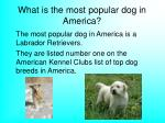 what is the most popular dog in america
