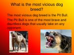what is the most vicious dog breed