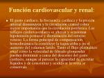 funci n cardiovascular y renal