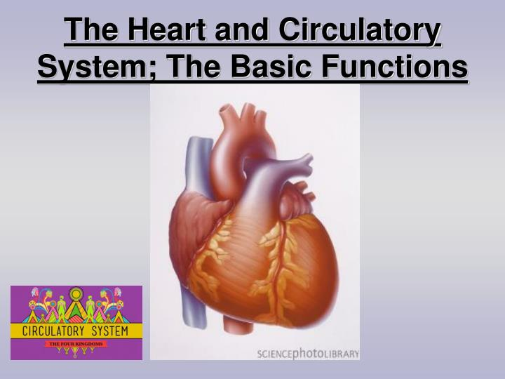the heart and circulatory system the basic functions n.
