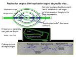 replication origins dna replication begins at specific sites