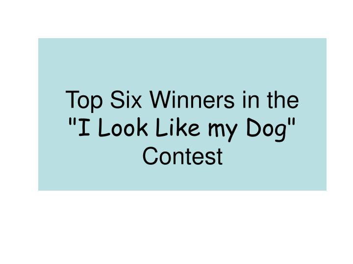 top six winners in the i look like my dog contest n.