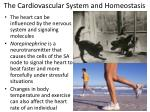 the cardiovascular system and homeostasis