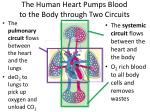 the human heart pumps blood to the body through two circuits