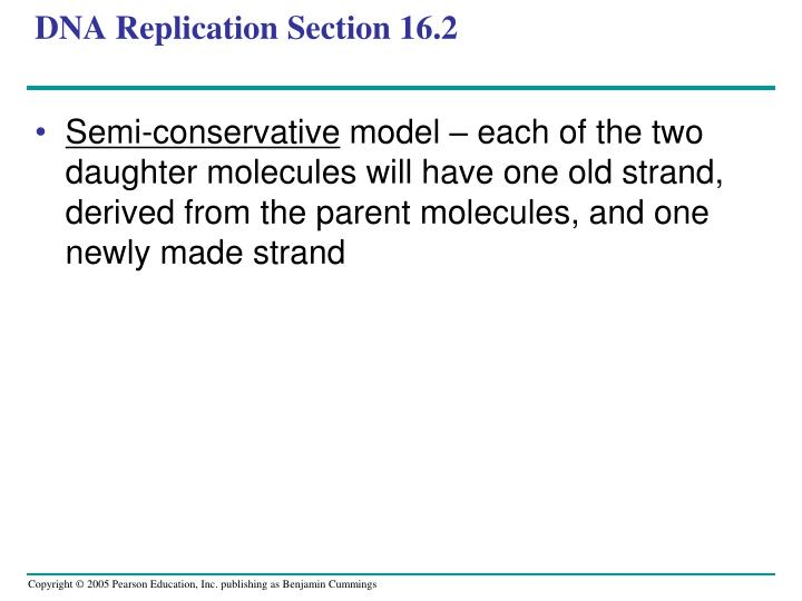 DNA Replication Section 16.2