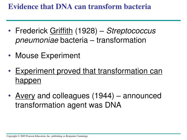 evidence that dna can transform bacteria n.