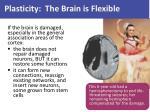 plasticity the brain is flexible