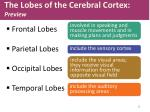 the lobes of the cerebral cortex preview