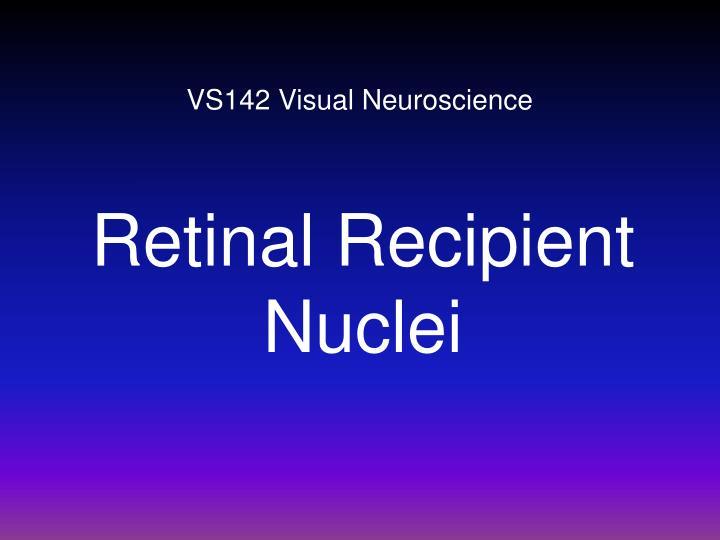 vs142 visual neuroscience n.