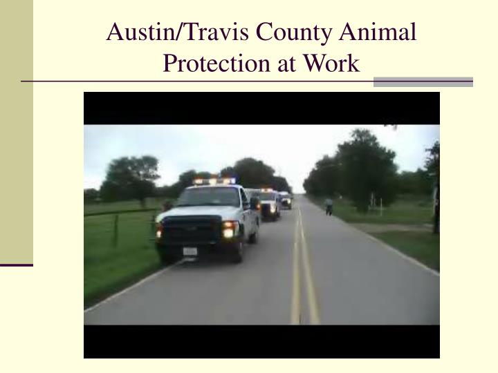 austin travis county animal protection at work n.