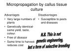 micropropagation by callus tissue culture