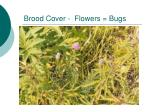 brood cover flowers bugs