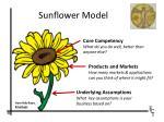 sunflower model