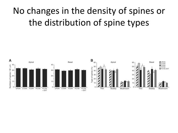 No changes in the density of spines or the distribution of spine types