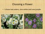 choosing a flower