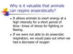why is it valuable that animals can respire anaerobically