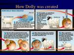 how dolly was created