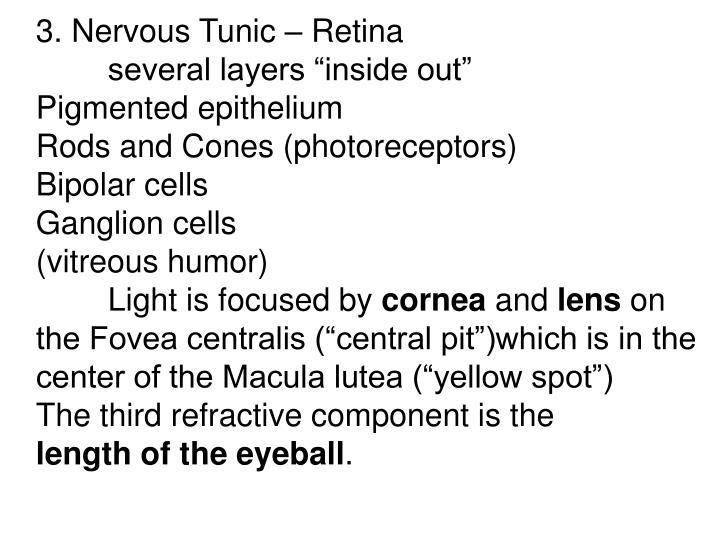 3. Nervous Tunic – Retina