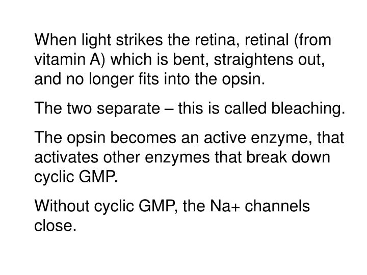 When light strikes the retina, retinal (from vitamin A) which is bent, straightens out, and no longer fits into the opsin.
