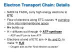 electron transport chain details