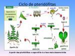 ciclo de pterid fitas