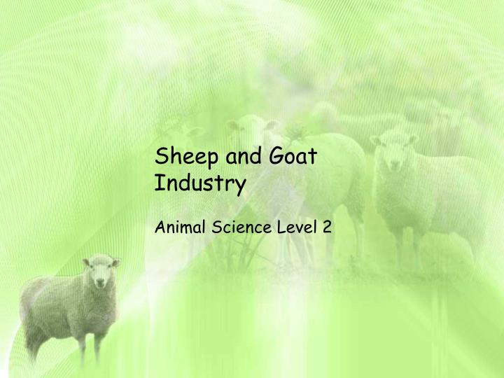 sheep and goat industry n.
