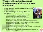what are the advantages and disadvantages of sheep and goat production