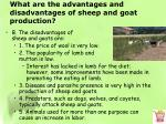what are the advantages and disadvantages of sheep and goat production1