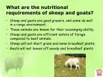 what are the nutritional requirements of sheep and goats