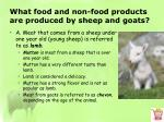 what food and non food products are produced by sheep and goats1