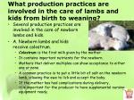what production practices are involved in the care of lambs and kids from birth to weaning