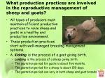 what production practices are involved in the reproductive management of sheep and goats