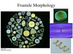 frustule morphology