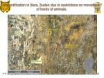 desertification in bara sudan due to restrictions on movement of herds of animals