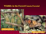 wildlife in the forest ciencia forestal