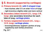 5 bronchi supported by cartilages