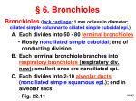 6 bronchioles