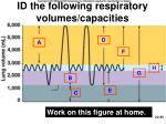 id the following respiratory volumes capacities