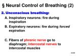 neural control of breathing 2