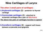 nine cartilages of larynx1