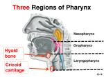 three regions of pharynx