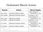oculomotor muscle actions